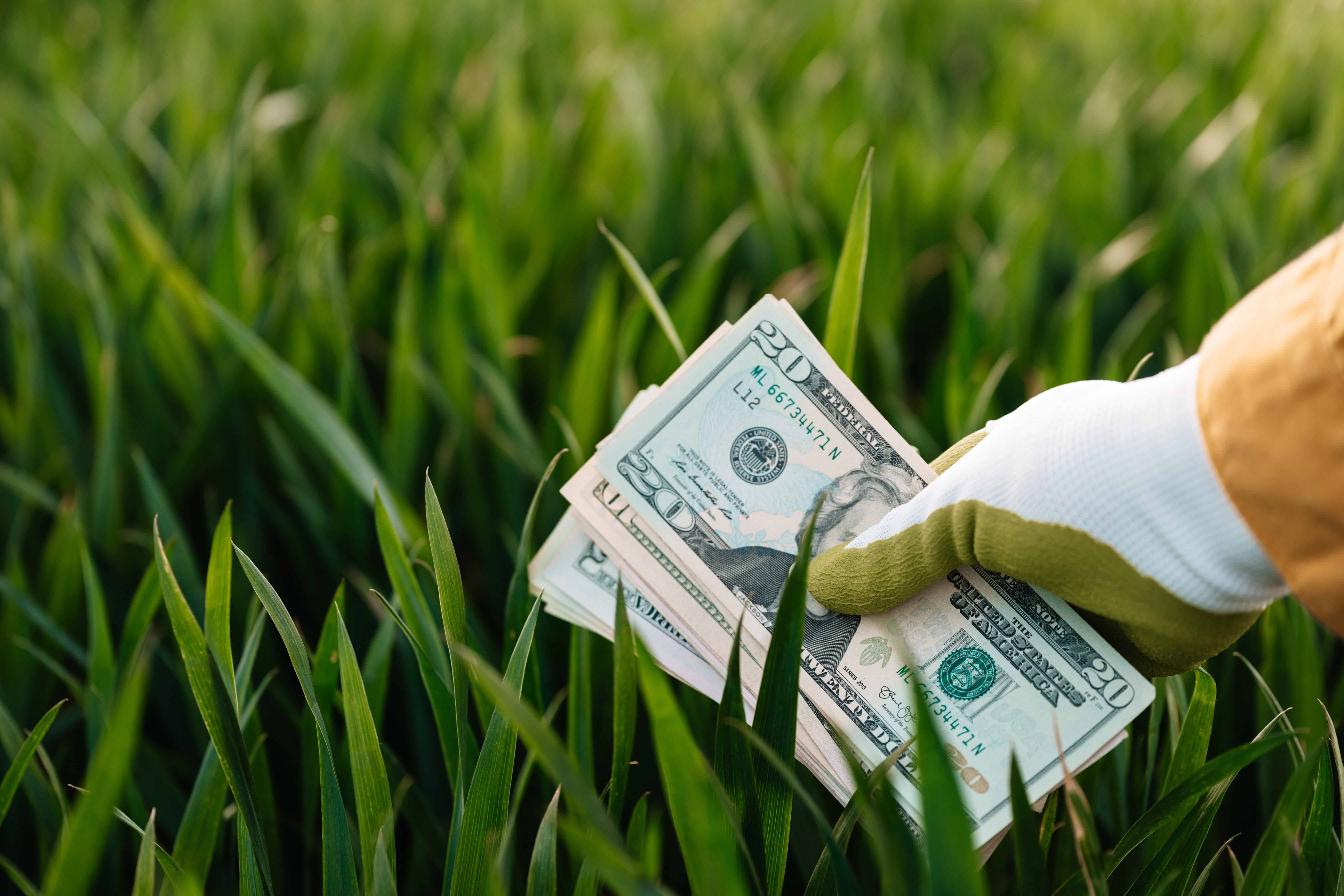 Finding Money